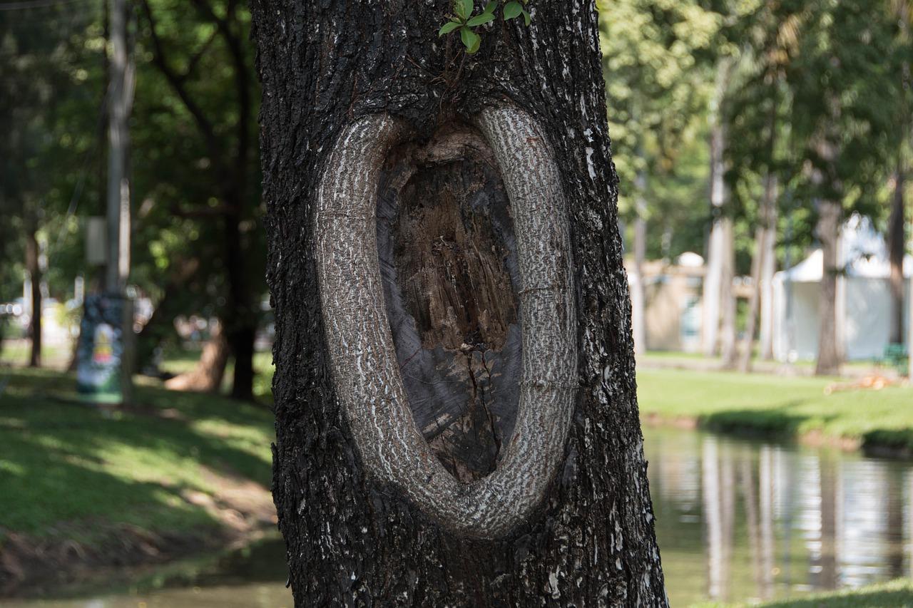 vulva-arbre
